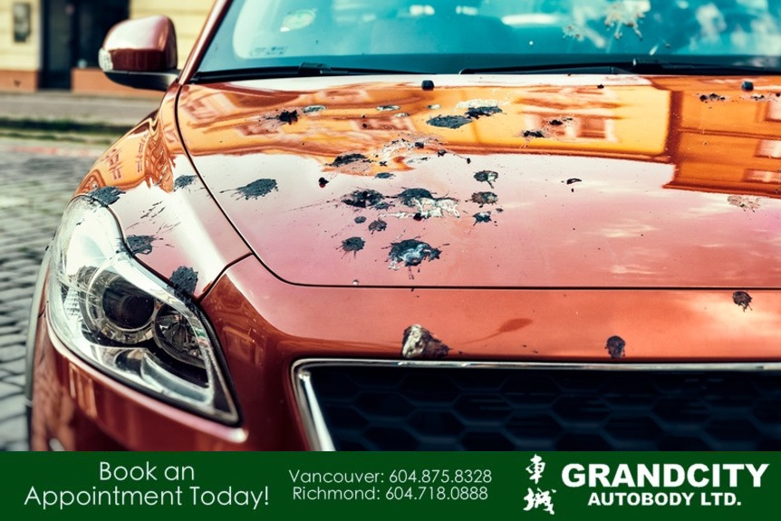 bird droppings on a car